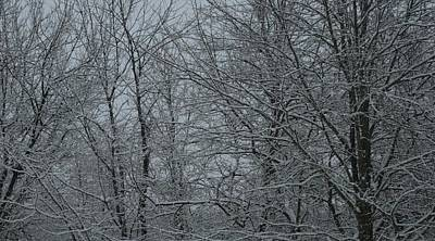 Photograph - Snow In The Woods by Christopher Kirby
