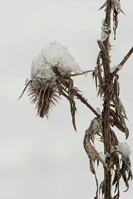 Photograph - Snow In Thistle by Robert Potts