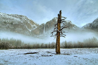 Photograph - Snow In Yosemite by Connie Cooper-Edwards