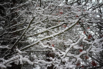 Photograph - Snow Laden Trees by Greg Simmons