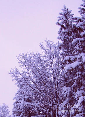 Photograph - Snow Laden Trees by Marianne NANA Betts