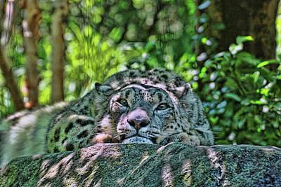 Photograph - Snow Leopard # 3 by Allen Beatty