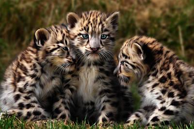 Snow Leopard Cubs - Closeup Art Print by Julie L Hoddinott