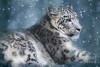Photograph - Snow Leopard by Geraldine DeBoer