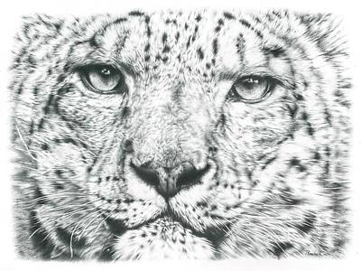 Leopard Drawing - Snow Leopard  by Remrov