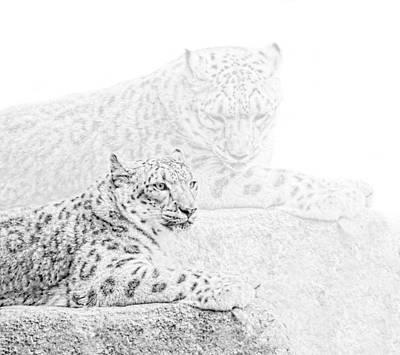 Photograph - Snow Leopards Monochrome by Jennie Marie Schell
