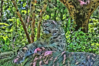 Photograph - Snow Leopard # 4 by Allen Beatty