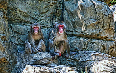 Photograph - Snow Monkeys by Allen Beatty