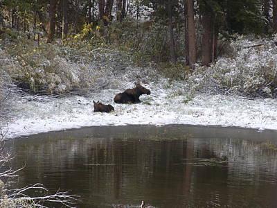Photograph - Snow Moose by David Wilkinson