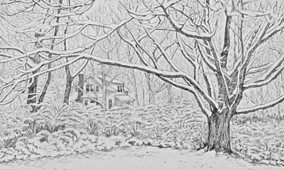 Snow Scene Landscape Drawing - Snow On An Old Ash Tree by Janice Petrella-Walsh