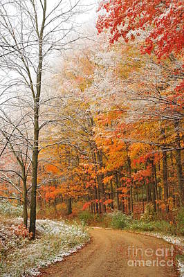 Snow On Autumn Trees Art Print by Terri Gostola