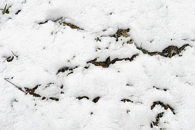 Photograph - Snow On Grass by Tom Gowanlock