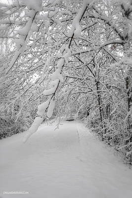Photograph - Snow On Macomb Orchard Trail by LeeAnn McLaneGoetz McLaneGoetzStudioLLCcom
