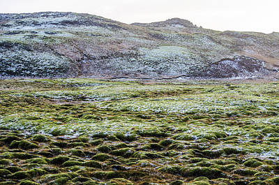 Photograph - Snow On Moss by Deborah Smolinske