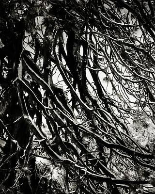 Photograph - Snow On Pine Boughs by Timothy Bulone