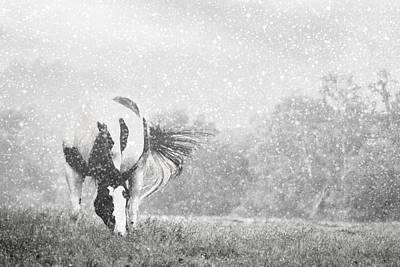 Photograph - Snow On Pinto by Alice Gipson