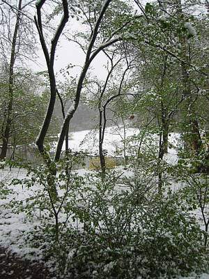 Snow On Spring Buds Art Print by Garth Glazier