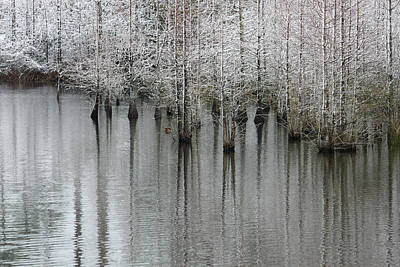 Cypress Swamp Photograph - Snow On The Cypresses by Suzanne Gaff