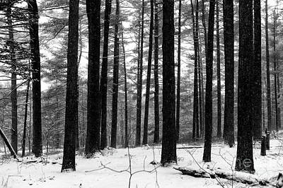 Photograph - Snow On The Ground by John Rizzuto