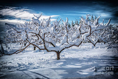Photograph - Snow On The Peach Tree by Nick Zelinsky
