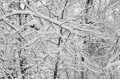 Photograph - Snow On Tree Branches Abstract 2 by Rick Bures