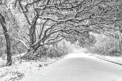 Photograph - Snow On Witsell Rd - Oak Tree by Scott Hansen