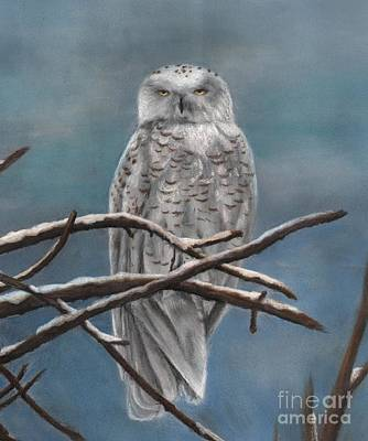 Drawing - Snow Owl by Christian Conner
