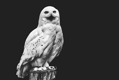 Photograph - Snow Owl by Pixabay