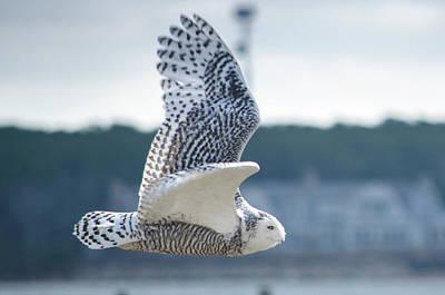 Photograph - Snow Owl by Steve Myrick