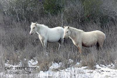 Photograph - Snow Palominos  by Captain Debbie Ritter