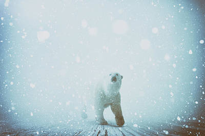 Polar Bear Digital Art - Snow Patrol by Katherine Smit