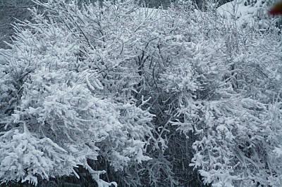 Snow Patterns Art Print by KatagramStudios Photography
