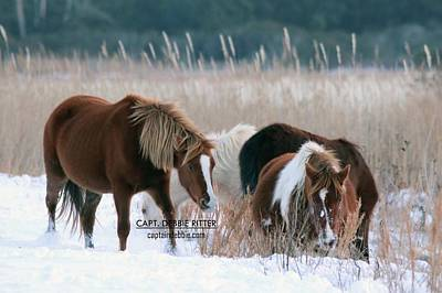 Photograph - Snow Ponies 5144 by Captain Debbie Ritter