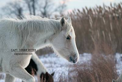 Photograph - Snow Ponies 5201 by Captain Debbie Ritter