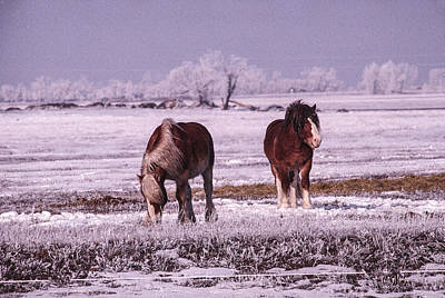Photograph - Snow Ponies-7 by William Kimble