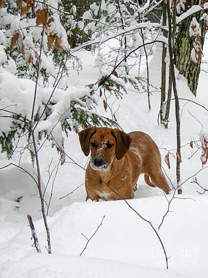 Noreaster Photograph - Snow Puppy by Mim White
