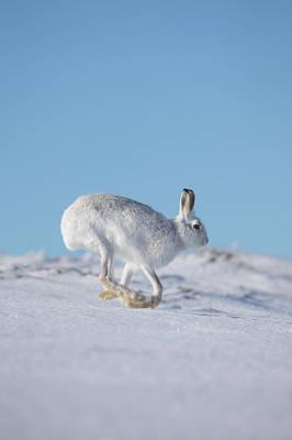 Photograph - Snow Runner by Peter Walkden