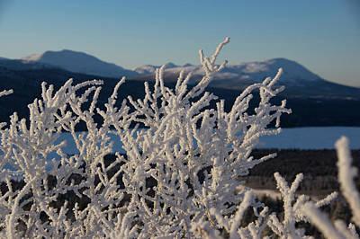 Photograph - Snow Scene 5 by Phyllis Spoor