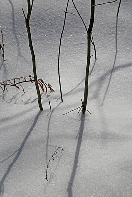Photograph - Snow Shadows 2018 3 by Mary Bedy