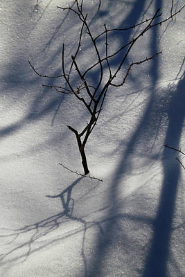 Photograph - Snow Shadows 2018 by Mary Bedy