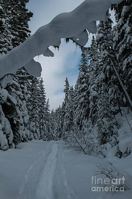 Photograph - Snow Shoe Trail by Rod Wiens