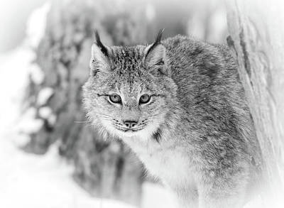 Photograph - Snow Stalker by Athena Mckinzie
