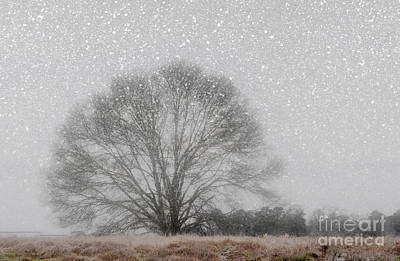 Photograph - Snow Storm Tree by Kathy Baccari