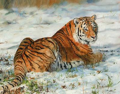 Siberian Wall Art - Painting - Snow Tiger by David Stribbling