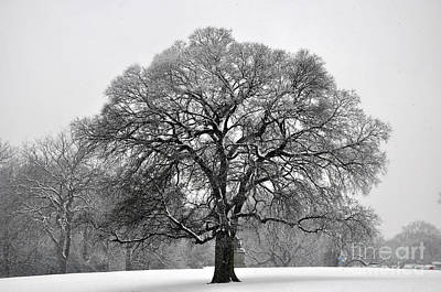 Photograph - Snow Tree 2 by Andrew Dinh