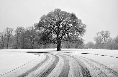 Photograph - Snow Tree by Andrew Dinh