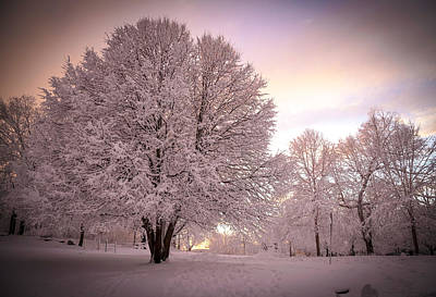 Snow Tree At Dusk Art Print