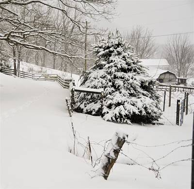 Photograph - Snow Tree by CK Brown