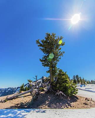 Art Print featuring the photograph Snow Tree by Jonny D