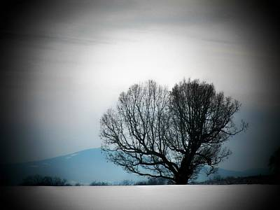 Photograph - Snow Tree by Joyce Kimble Smith